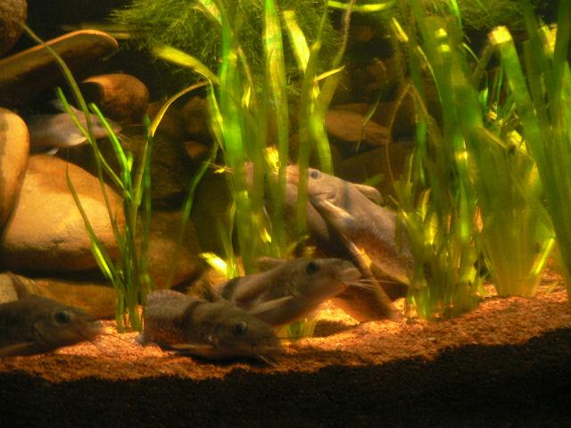 L 39 aquarium de sydney pzp nialb log le b log de zacharie perrine nia et ban - Requin rigolo ...